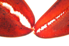 омар стоковое изображение