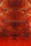 омар Стоковые Изображения RF