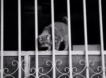 домашнее животное кота Стоковые Фотографии RF