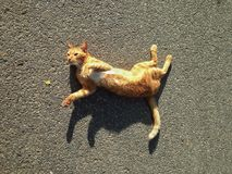 домашнее животное кота стоковая фотография