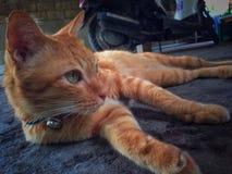домашнее животное кота стоковое фото