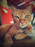 домашнее животное кота стоковое изображение