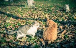 2 домашней кошки среди травы и листьев Стоковое фото RF