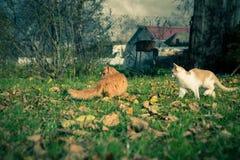 2 домашней кошки среди травы и листьев Стоковая Фотография