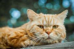 домашняя кошка в его клетке в саде Стоковая Фотография RF