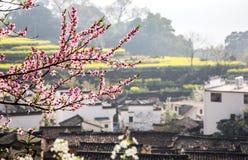 дома и цветки Стоковое фото RF