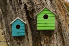 2 дома ` s птицы на дереве Стоковое Фото