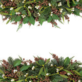 Омела и флора зимы Стоковые Фотографии RF