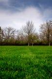 дом зеленого цвета травы стоковое изображение rf