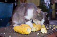 дом кота головная Стоковое Изображение