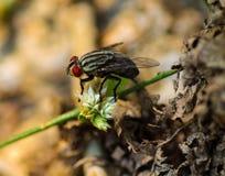 дом мухы Стоковая Фотография