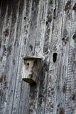 дом птицы старая Стоковое Изображение RF