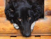 дом друга семьи собаки 4 кабелей расквартировывает арендованные леты Стоковые Фото