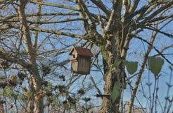 дом s птицы стоковое фото