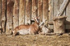 Она-коза с ребенк Стоковое Изображение RF