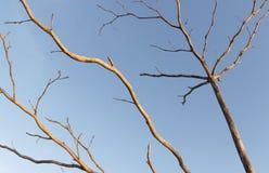 Онемелое дерево Стоковое Фото