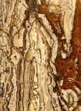 Оникс травертина Стоковая Фотография
