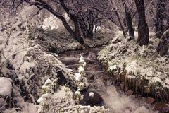 Оно в горах транс--Ili Alatau Стоковые Фото