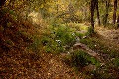 Оно в горах транс--Ili Alatau Стоковые Изображения RF