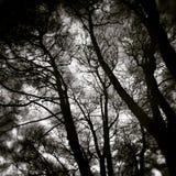 Оно не было нами, им было взглядом леса художническим в черно-белом Стоковое Изображение