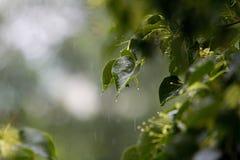 Оно ` s идя дождь весь день Стоковые Изображения