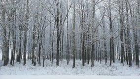 Оно ` s идя снег в лесе Снег-покрыло деревья видеоматериал
