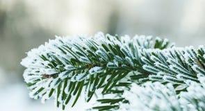 Он украшает ветвь покрыт с изморозью Стоковые Изображения