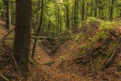 Опарник в старом лесе в осени Стоковая Фотография
