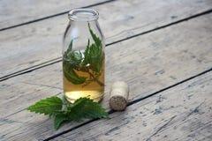 Опарник с тинктурой спирта и листьями крапивы стоковое фото