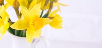 Опарник с narcissuses на белой предпосылке Весна, матери da Стоковые Изображения