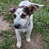 Опасливая собака Стоковая Фотография RF