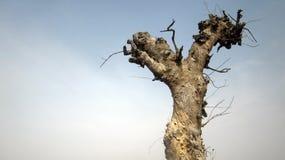 Опасное дерево и голубое небо Стоковые Изображения
