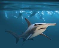 Опасное заплывание стоковое фото rf