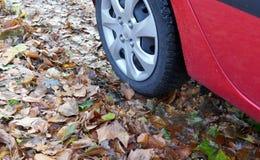 Опасность влажной листвой в осени на дороге Стоковое Изображение RF