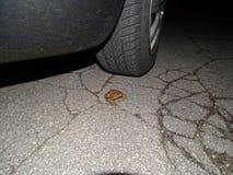 Опасность на дорогах Стоковая Фотография