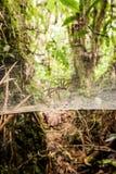 опасность amazonia Стоковое Фото