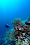 Опасно красивая скуба Ачеха Индонезии Стоковые Фото