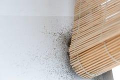 Опасно mouldy белая стена Стоковое Изображение RF