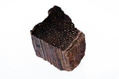 Опал Woody Стоковые Изображения RF