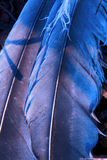 Оперение голубое и абстрактное Стоковое фото RF