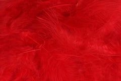 оперяет красный цвет Стоковое Фото