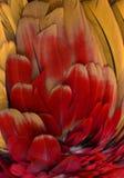 оперяет померанцовый красный цвет Стоковая Фотография