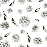 оперяет розы Стоковое Фото