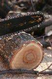 опилк пилы Стоковое Фото