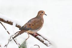 Оплакивать нырнул в снежке Стоковые Изображения