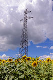 Опора линии электропередач, высоковольтная линия в поле солнцецвета Стоковая Фотография