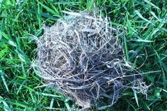 Опорожните гнездо которое упало на траву Стоковая Фотография