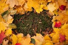 дополнительный иллюстратор рамки формы eps самана включает листья Стоковые Фотографии RF