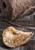 Определите высушенный гриб шиитаке Стоковое Фото