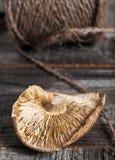 Определите высушенный гриб шиитаке Стоковые Фото